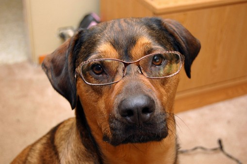 PUP IN GLASSES